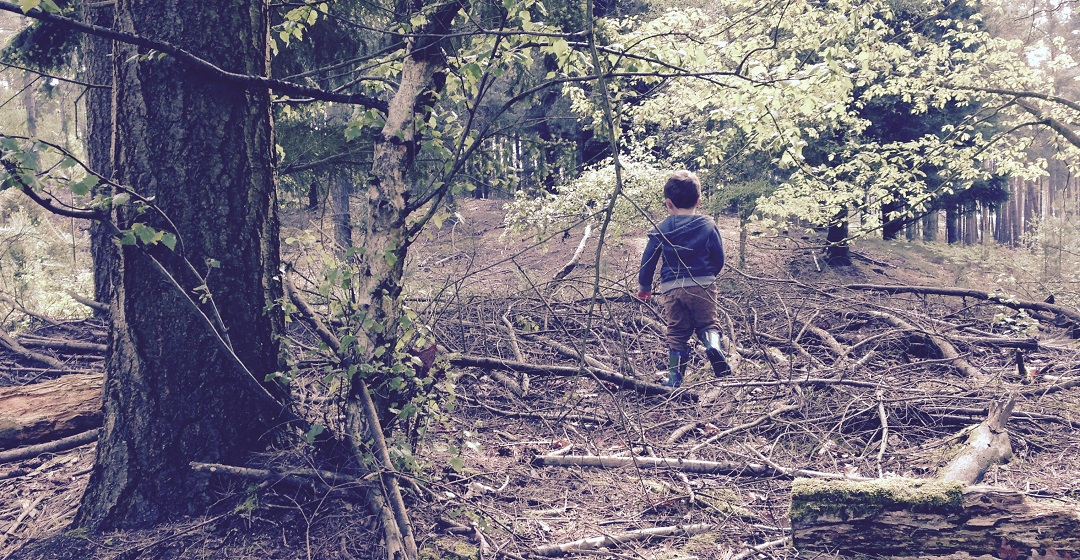 Forest School Hampshire The Learning Ranger